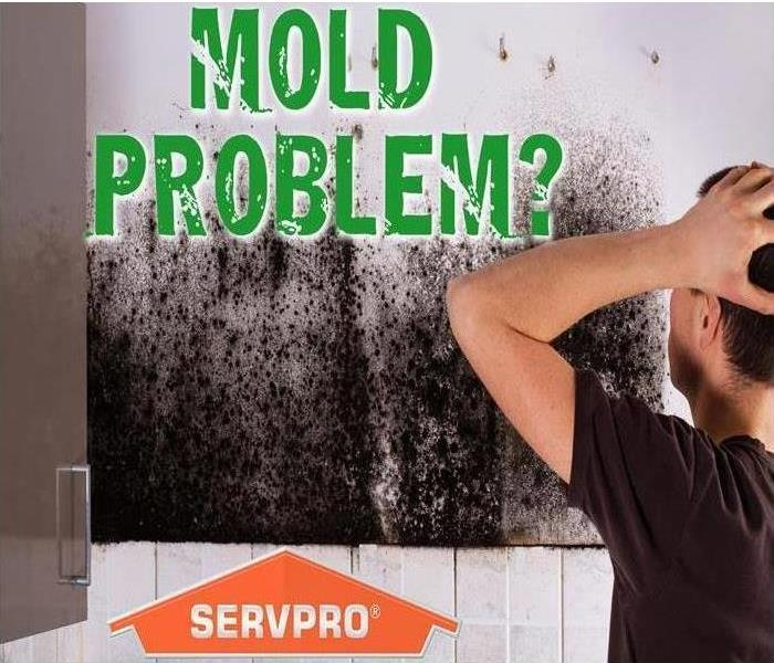 Mold Remediation Do You Understand Mold Removal and Remediation ?